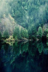 Pine Tree Lake Reflections