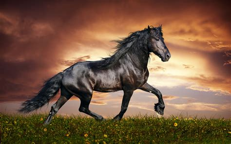 horse wallpapers hd arabian horses animals amazing active dancing awesome