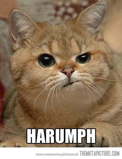"811 Best ""cat Quotessayingsvideos"" Images On Pinterest"