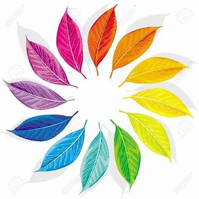 Circle Clipart Chromatic Wheel Multi Leaves Colored