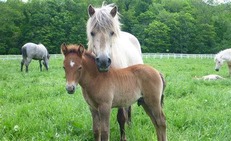horses read human emotional cues