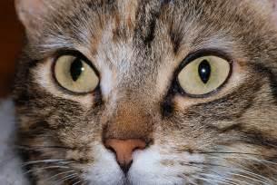how to cat eye file cat 2007 2 jpg wikimedia commons