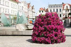 Sonnenschirm Für Windige Terrasse : blumen f r den balkon und die terrasse greenspired ~ Bigdaddyawards.com Haus und Dekorationen