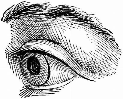 Eye Clipart Drawing Quoom Line Realistic Eyeball