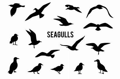 Flying Seagulls Silhouettes Seagull Fly Brush Drawing