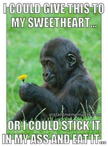 instantmememakercom monkey love instant meme maker