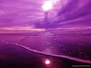 Deep Purple | Long Beach Peninsula Photo