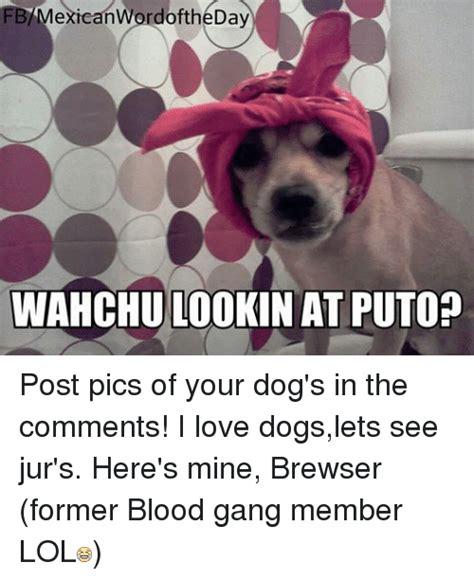 Blood Gang Memes - 25 best memes about blood gang blood gang memes
