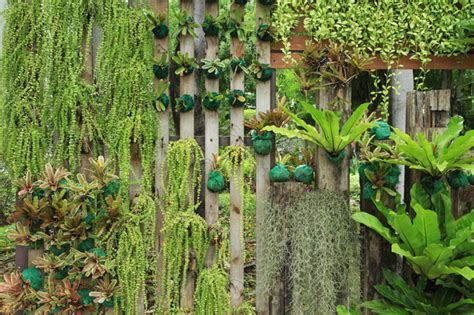 wall plants for shade homelife how to grow a green wall