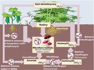 Photosynthese formel
