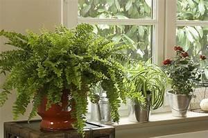 Plantes Pour Chambre : plante pour maison ~ Melissatoandfro.com Idées de Décoration