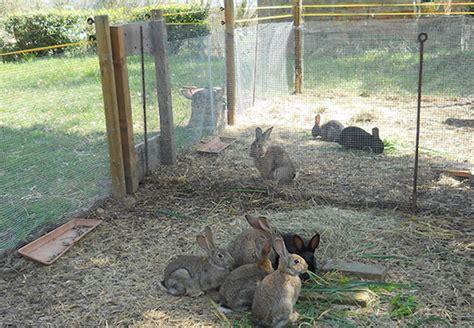 Gabbie Allevamento Conigli Conigli Quot Allevati A Terra Quot In Italia Crescono In Gabbie