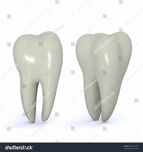 Image Gallery molar teeth