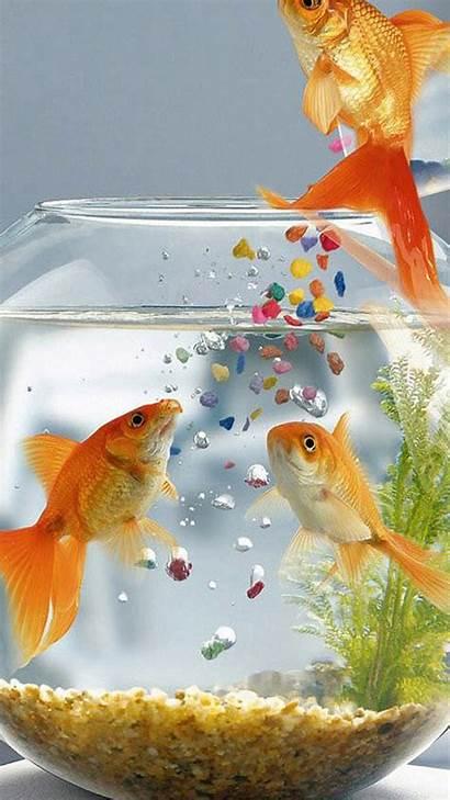 Fish Gold Wallpapers Ios Goldfish Galaxy Aquarium