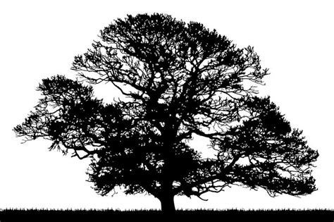 oak tree clipart black and white oak tree silhouette clipartion