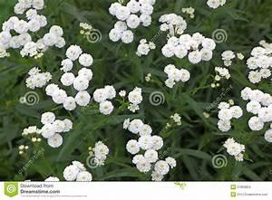 Kleine Weiße Truhe : kleine wei e gartenblumen stockfoto bild 51803824 ~ Indierocktalk.com Haus und Dekorationen