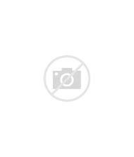 Scarab Beetle Female