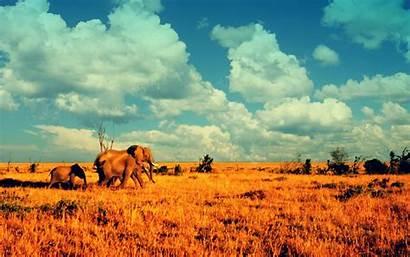African 1080p Elephant Nature Animals Elephants Deserts