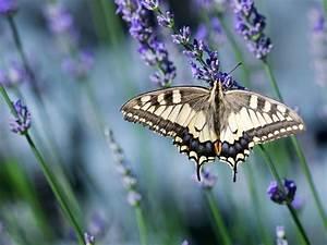 5 Herbs For A Butterfly Garden