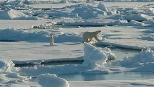 Arctic | Alaska Conservation Foundation  Arctic