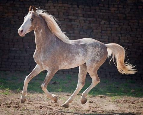 Most Beautiful Horse Colors