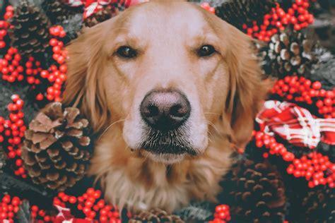 silvesterangst bei hunden  kommt ihr entspannt ins