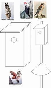 Bird Houses & Nesting Box Woodworking Plan: Pileated
