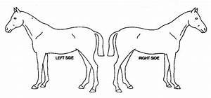 Horse  Diagram 02