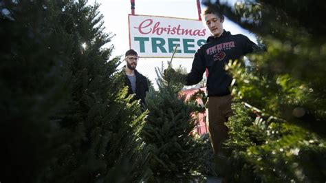 5 tips for picking and preserving your christmas tree