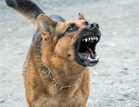 top  des races de chiens considerees comme les