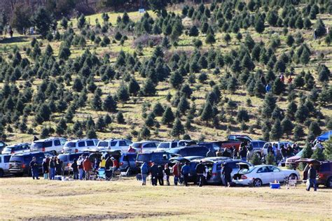 battenfeld s christmas tree farm is getting ready to kick off the 2014 holiday season find out