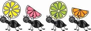 Was Essen Ameisen : ameisen tragen nahrung stock illustrationen vektors ~ Lizthompson.info Haus und Dekorationen