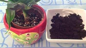 Marc De Café Plantes D Intérieur : combattre les pucerons naturellement astuce maison pour plantes d 39 int rieur youtube ~ Melissatoandfro.com Idées de Décoration