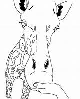 Giraffe Coloring Face Printable Animal Animals Outline Giraffes Head Giraff Drawings Line Clipart Sheets Cliparts Cartoon Pdf Chakiradecor Camels Africa sketch template