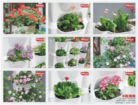 planter des glaieuls en pot vegetables pots for balcony flower planter boxes combination flowerpot 3d planting wall