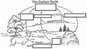 Copy Of The Carbon Cycle