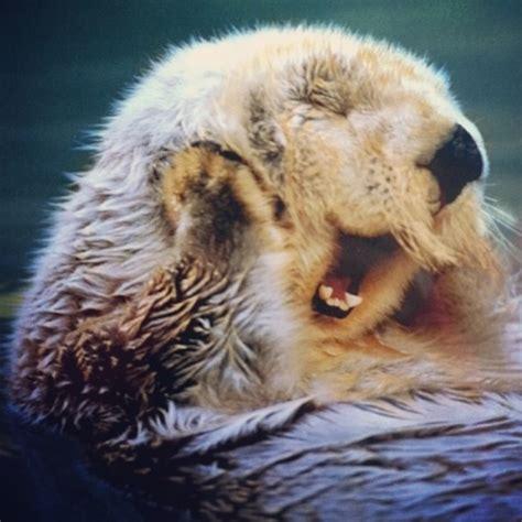 Cute Otter Wallpaper - WallpaperSafari