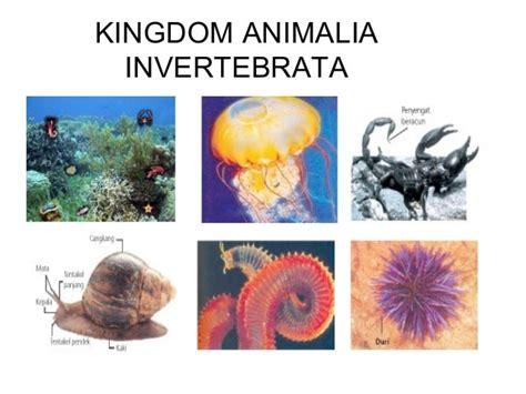 Pengertian Dan Jenis-Jenis Invertebrata - Pelajaran ...
