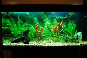 Fish Freshwater Aquarium Talk - Page 2