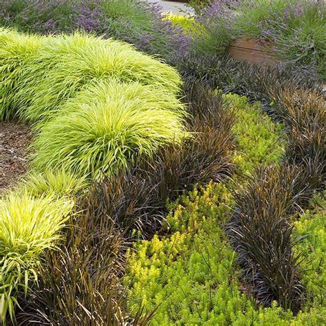 1000 images about ornamental grasses on