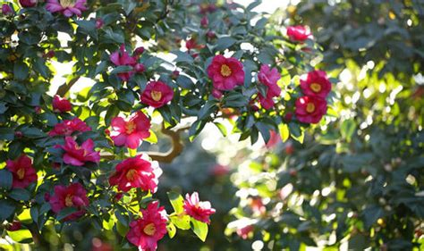 winter garden bring  extra sparkle   variety