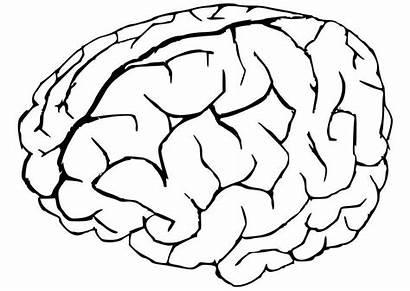 Brain Coloring Pages Human Printable Cartoon Parts