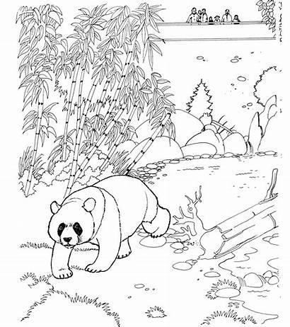 Panda Coloring Pages Bear Animals Habitat Animal