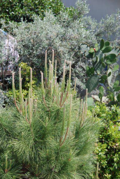 mediterranean vegetation photo