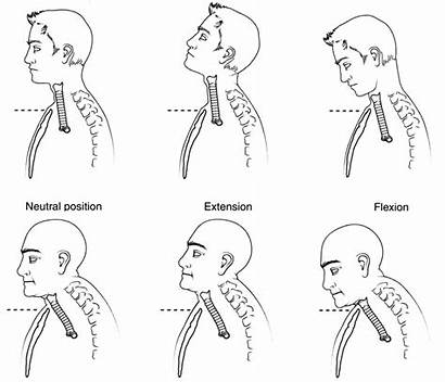 Flexion Extension Neck Mobility Trachea Diagram