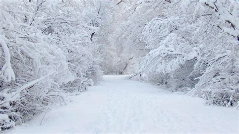 Background Winter Theme by Winter Desktop Backgrounds Wallpaper Cave