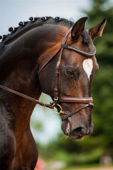 horses dressage bit horse stop crunch why does