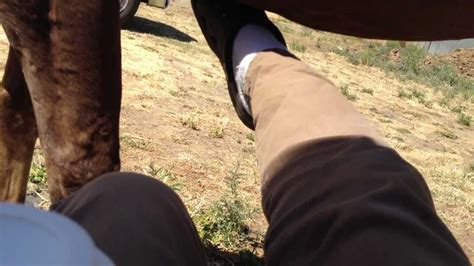 How To Kick A Horse The Right Way Not Hard And Not To