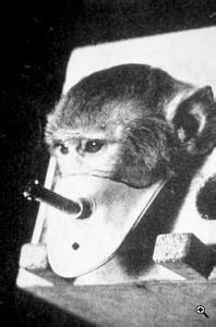campana  tabaco tabacaleras torturadoras de animales