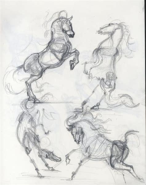 horse  images  pinterest animal anatomy